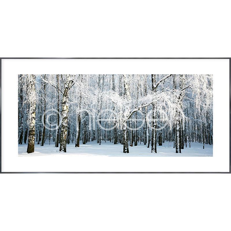 """Beeld met lijst """"Birch Forest Snow"""" met lijst van aluminium Alpha"""