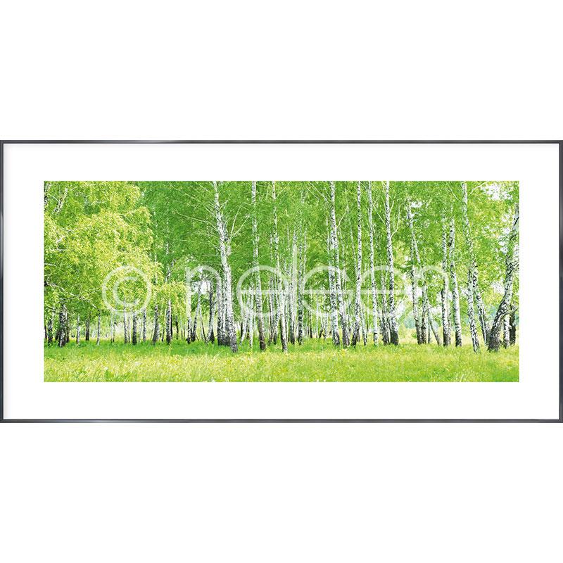 """Beeld met lijst """"Birch Forest"""" met lijst van aluminium Alpha"""
