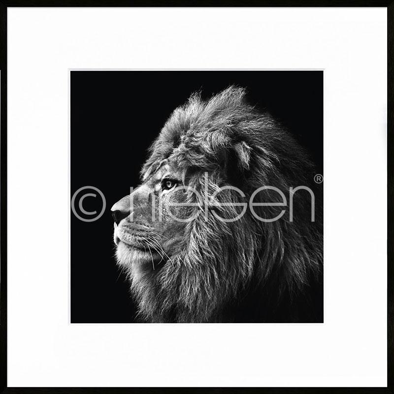 """Beeld met lijst """"Lion black and white"""" met lijst van aluminium C2"""