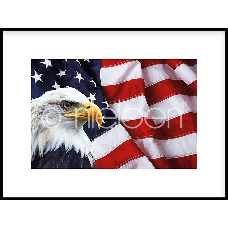 """Beeld met lijst """"Eagle USA"""" met lijst van aluminium C2"""