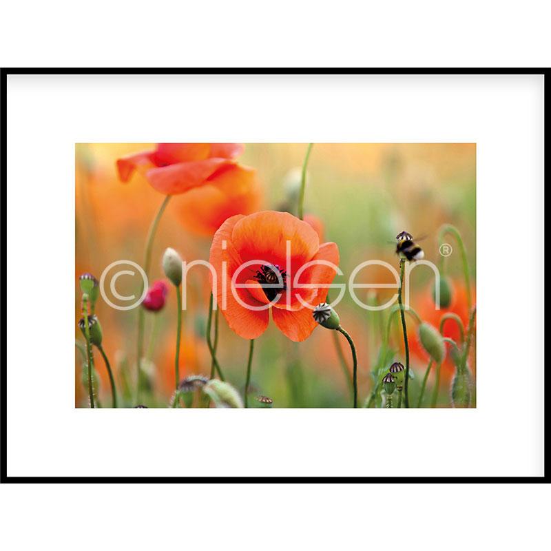 """Beeld met lijst """"Poppy Flower"""" met lijst van aluminium C2"""