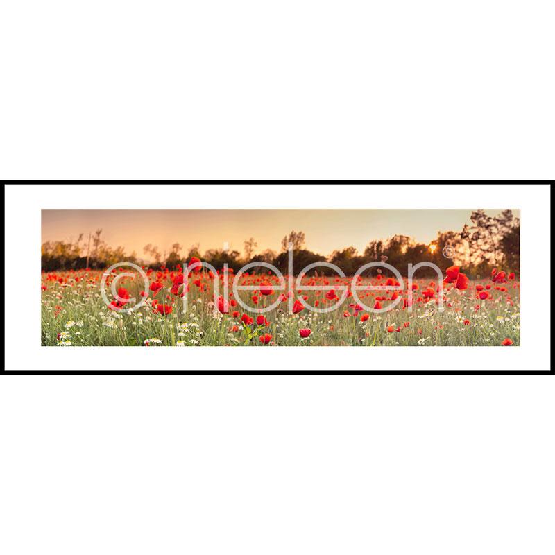 """Beeld met lijst """"Poppy Flower Field"""" met lijst van aluminium C2"""